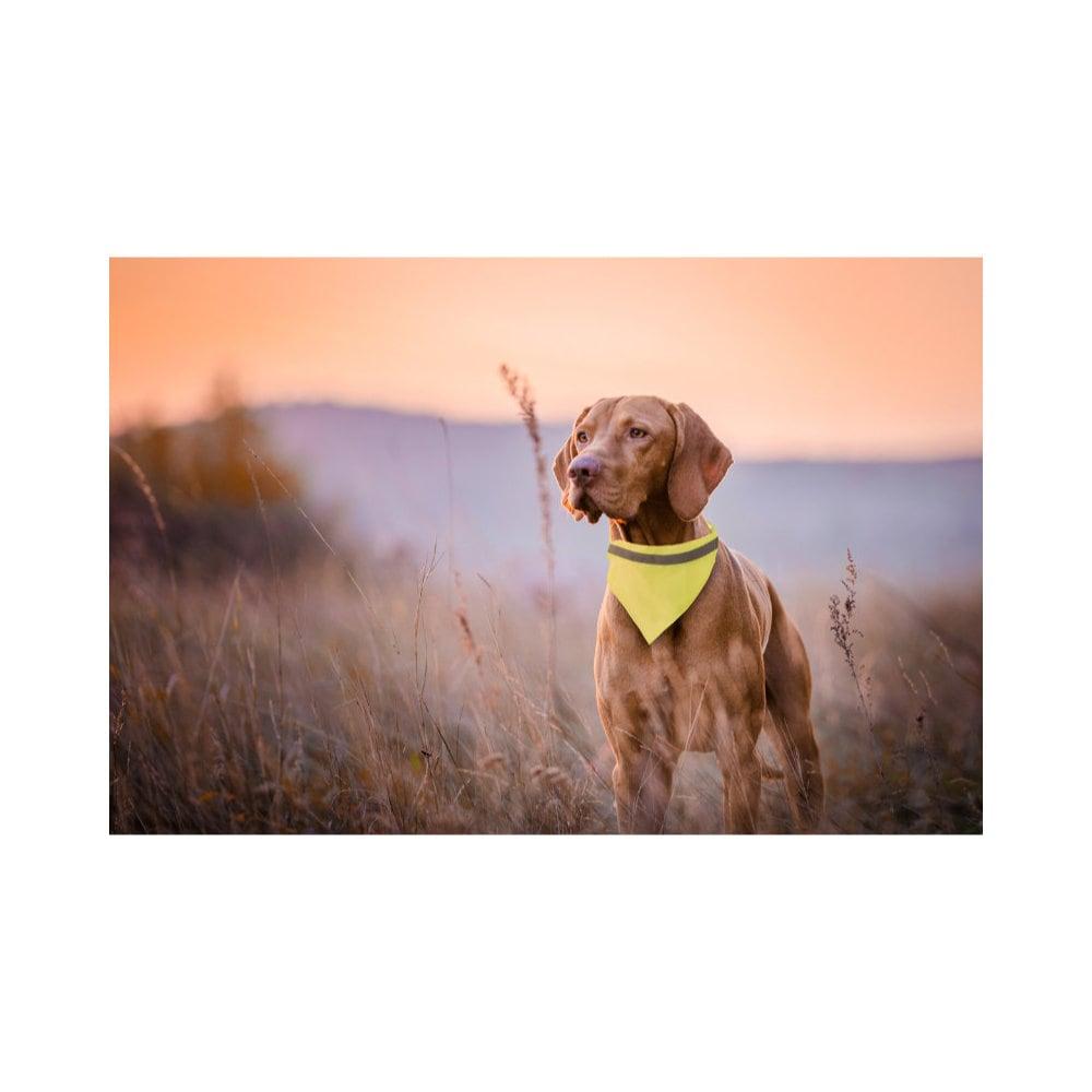 Bipols - odblaskowa husta dla psa