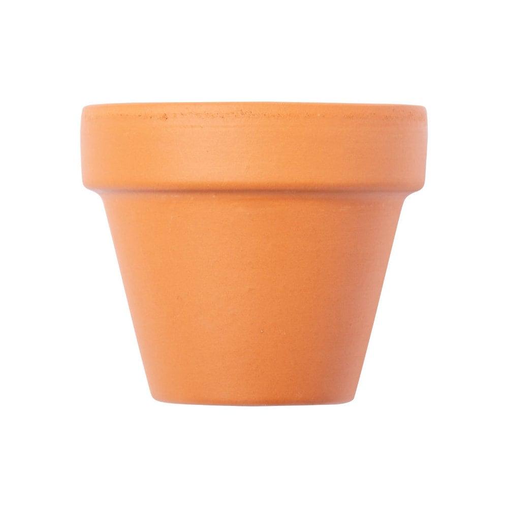 Soltax - doniczka z nasionami